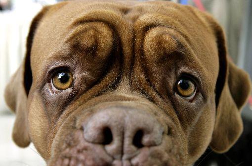 Das können Sie tun, wenn Ihr Hund Angst vor Gewitter hat