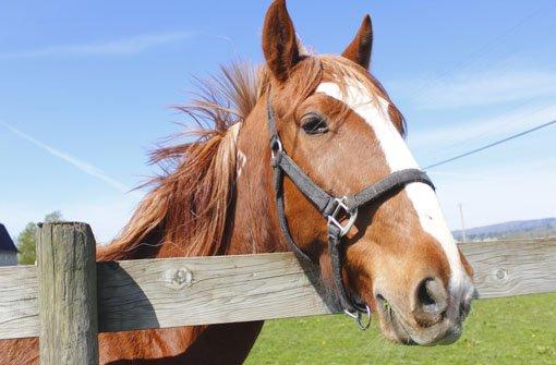 14. Mai: Pferd stürzt samt Reiterin