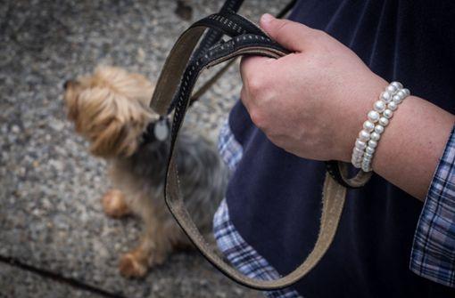 Radler überfährt Hund – beide flüchten