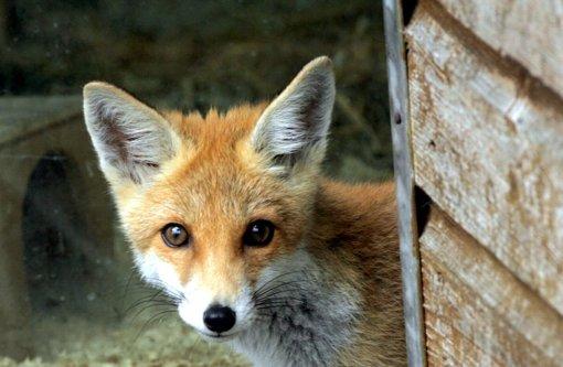 8.1.: Autoüberschlag wegen Fuchs
