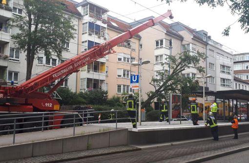 Baum stürzt auf SSB-Oberleitung