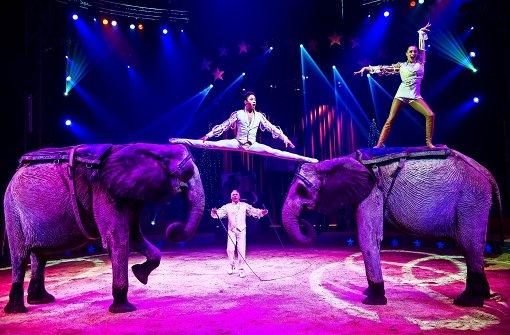 Stadträte wollen Zirkus ohne Wildtiere