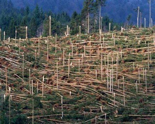 Orkan lehrt neue Forstpolitik