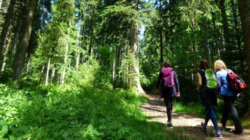 Wandern durch die malerischen Wälder um Freudenstadt  Foto: Freudenstadt Tourismus