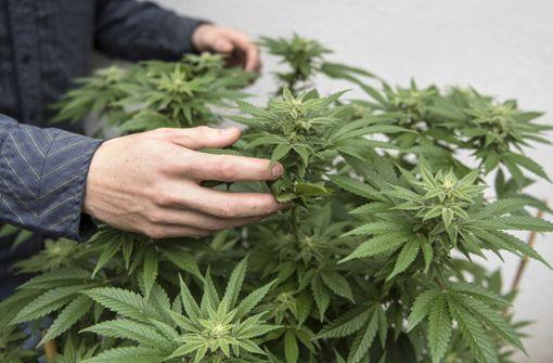 Kripo-Beamte fordern Legalisierung