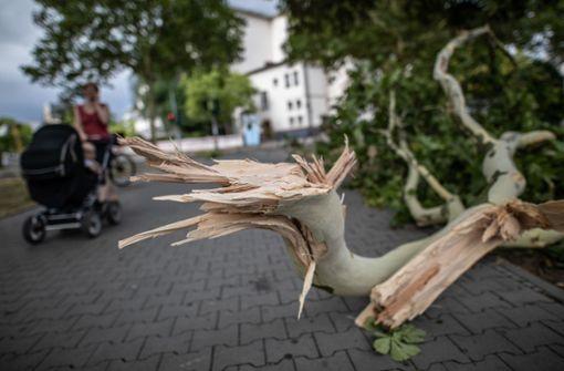 In Frankfurt stürzten Bäume durch das Unwetter um. Foto: dpa