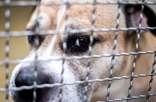 """Hund """"Chico"""" war nach der tödlichen Attacke im Tierheim in Hannover untergebracht. Foto: dpa"""