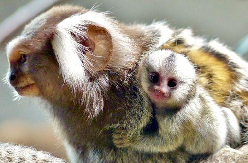 Auch Affen und Vögel machen selbstlose Geschenke
