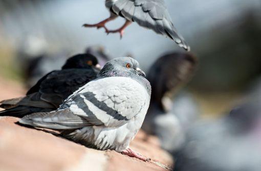 Wer auf Balkon Tauben füttert, riskiert Mietwohnung