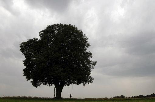 Sepp Mahler befasst sich mit dem Thema Baum Foto: AP