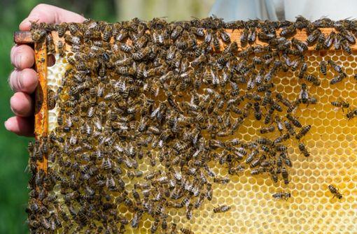 Bienenstöcke von Wiese verschwunden