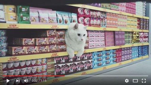Wenn Katzen Einkaufswagen schieben