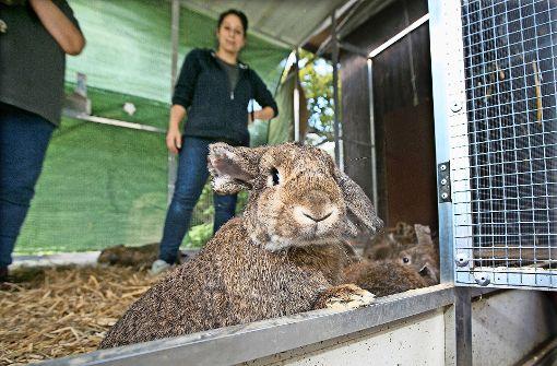 Veterinäramt rettet 100 Kaninchen aus Keller