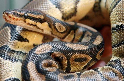 18.7.: Python bei Mäharbeiten getötet