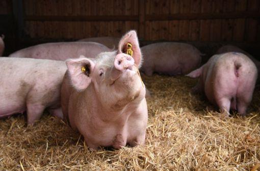 Bauern wollen Deutungshoheit