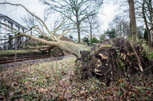 59-Jähriger von umstürzendem Baum erschlagen