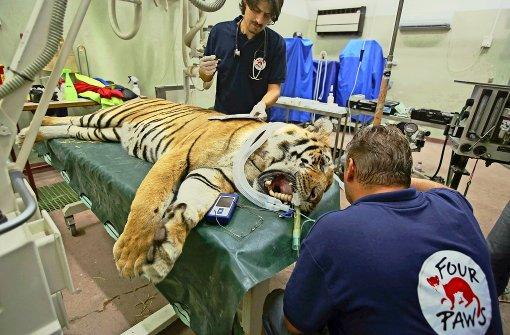 """""""Vier Pfoten"""" rettet Tiere aus schlimmstem Zoo der Welt"""