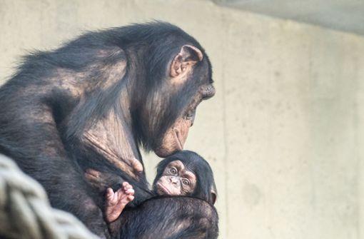 Drei kleine Affen aus Zoo ausgebrochen