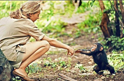 Auf dem Naturvision-Filmfestival gehören Giraffen zu den Hauptdarstellern. Gezeigt wird  auch ein  Porträt der Affenforscherin Jane Goodall. Foto: Naturvision