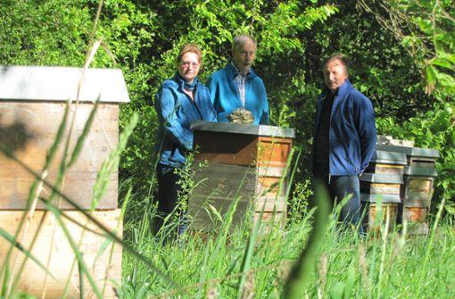 So geht es weiter mit den unerwünschten Honigbienen