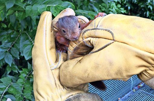 Bosch-Werkfeuerwehr rettet Eichhörnchen-Babys