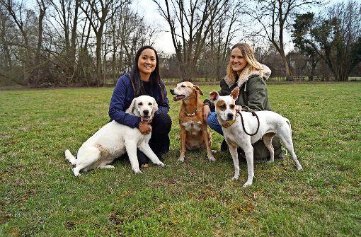 Junge Frauen helfen Hunden in Not