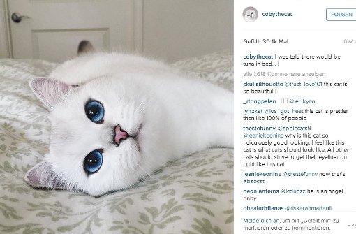 Diese blauen Augen verzaubern das Internet