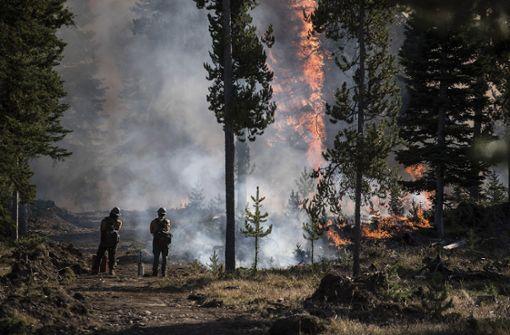 Großer Waldbrand wütet in Wyoming