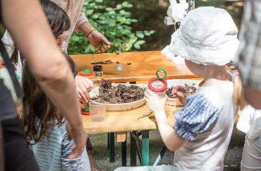 Sommerfest am haus des waldes kleine forscher entdecken kleine