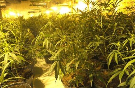 Die Polizei im Land hat in dieser Woche gleich zwei illegale Cannabisplantagen entdeckt. (Symbolfoto) Foto: dpa