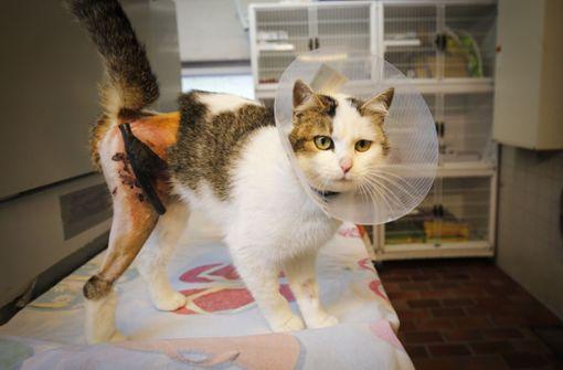 Shorty ist zwei Jahre alt und wurde kürzlich operiert.   Foto: factum/Granville