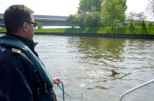Reh aus Neckarkanal gerettet