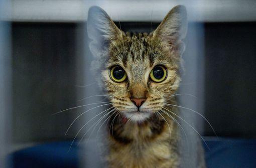 Vermisste Katze kehrt nach fünf Jahren nach Hause zurück