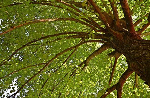 Für die Stadtbäume zählt jeder Liter Wasser