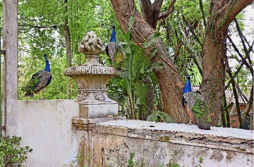 Zoos und Gärten in der zeitgenössischen Kunst
