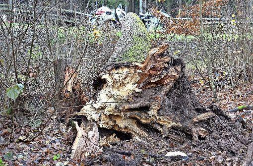 Ein Arborist sucht nach Erklärungen