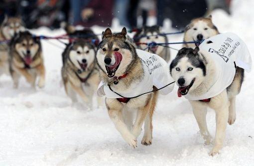 Iditarod - das härteste Rennen der Welt