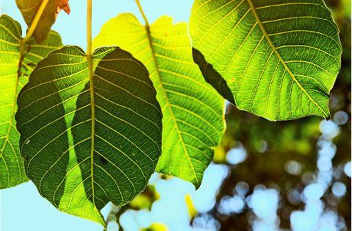 Saubere Energie aus künstlichen Blättern