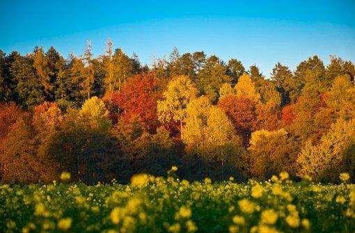 Orangerot leuchten die Blätter, die nach und nach von den Bäumen fallen und den Boden golden bedecken. Wer die bunte Farbpracht einmal aus einer anderen Perspektive betrachten möchte, der kann beispielsweise im Stuttgarter Waldklettergarten in Zuffenhausen und im Schmellbachtal hoch hinaus. Foto: Lichtgut/Volker Hoschek