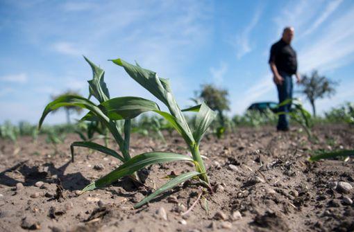 Massive Auswirkungen der Dürre im Südwesten