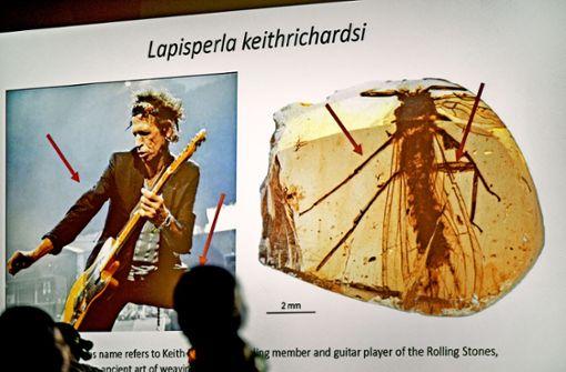 """Die nach Keith Richards benannte Fliege ist """"relativ zersaust"""". Foto: Lichtgut/Max Kovalenko"""