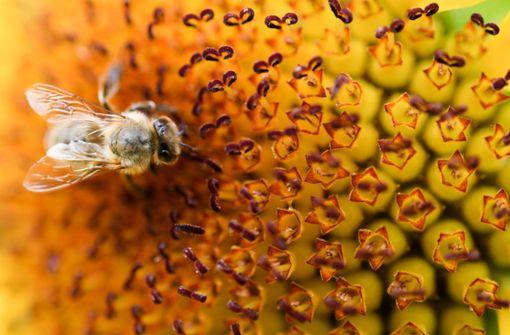 Die geheimnisvolle Welt der Bienen