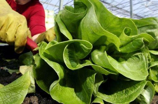 Schon wieder Pestizide im Salat