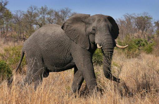 Elefant trampelt zwei Touristen tot