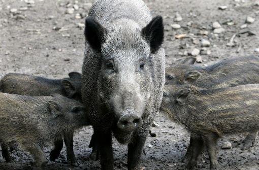 Frischling hat Schwein bei Unfall