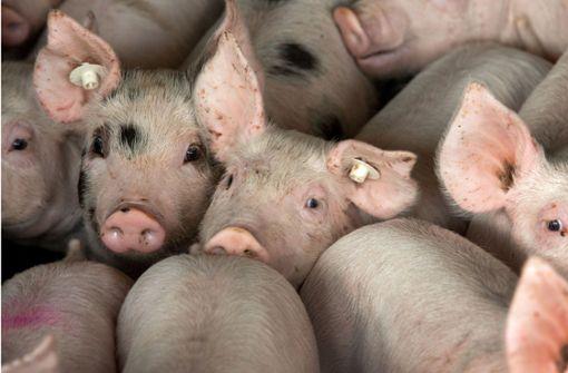 Tiere werden in der deutschen Landwirtschaft unter teils unzumutbaren Verhältnissen gehalten. Foto: dpa