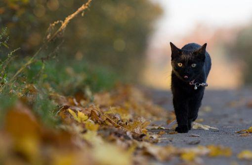 Autofahrer rast mit verletzter Katze zur Klinik und verunglückt