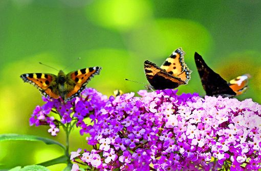 Das Land will die biologische Vielfalt fördern