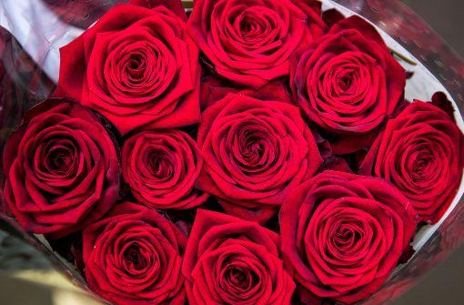 Rosen Zum Valentinstag Sind Das Eine U2013 Sie An Einem Romantischen Ort Zu  überreichen, Das ...
