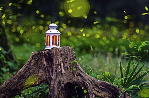 Warum sich Glühwürmchen nicht allen zeigen